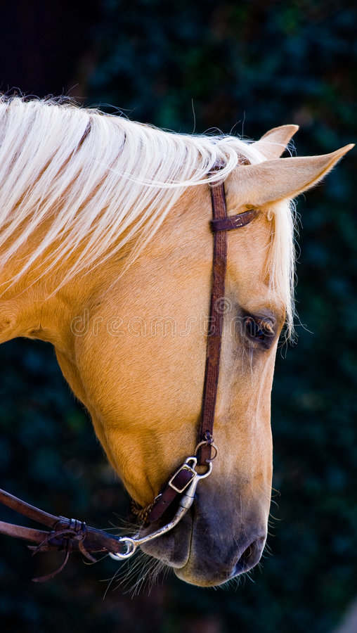 Download Sad horse stock image. Image of equine, mare, tired, active - 6699477