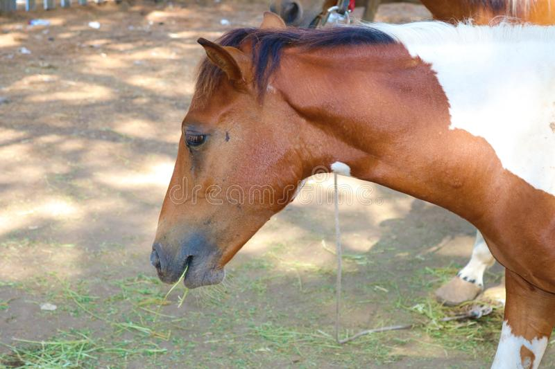 Image of a horse detail. Sad horse. Image of a horse detail in the summer. Beautiful horse stock photos