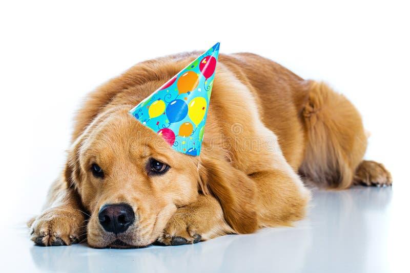 SAD hund på en födelsedagdeltagare arkivbild