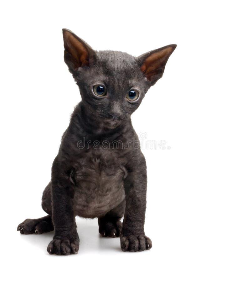 Download Sad kitten stock photo. Image of isolated, black, puss - 10809054