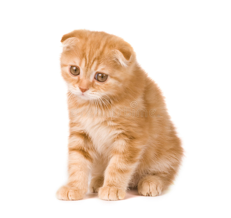 Sad kitten stock photo