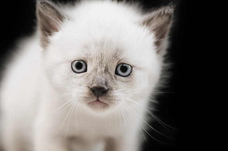 Sad kitten stock photography