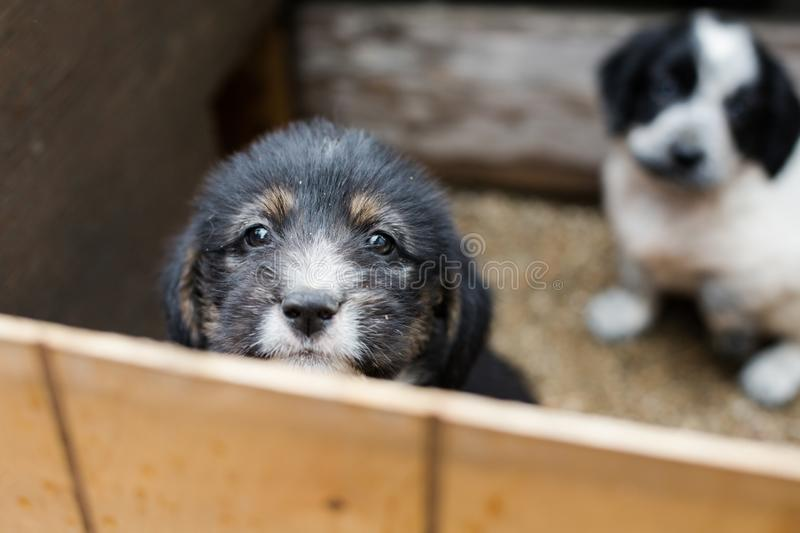Sad Little puppy in a wooden box is asking to be adopted with hope. Homeless black and tan dog royalty free stock photo