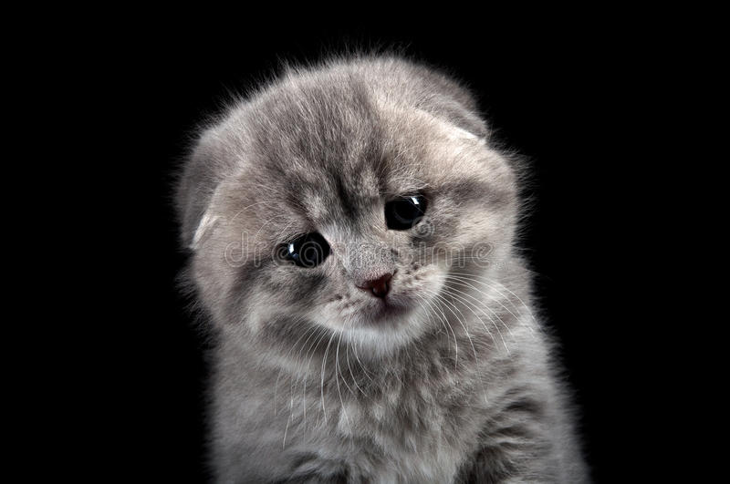 Download Sad lonely kitten stock photo. Image of lovable, expression - 24090776