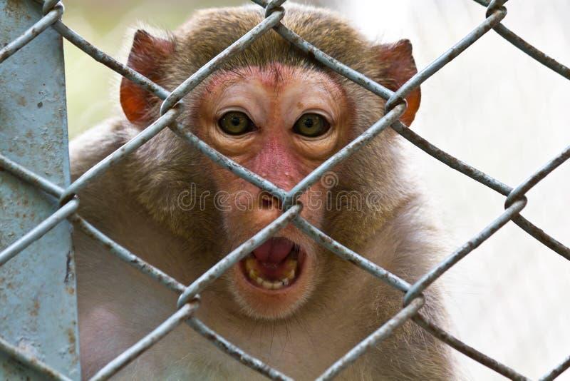 Download Sad monkey stock image. Image of animal, small, monkey - 19198631