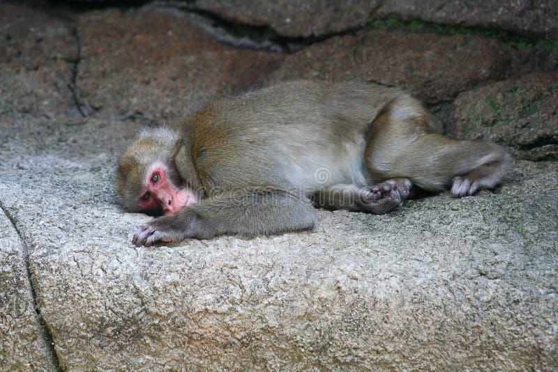 Sad monkey stock images