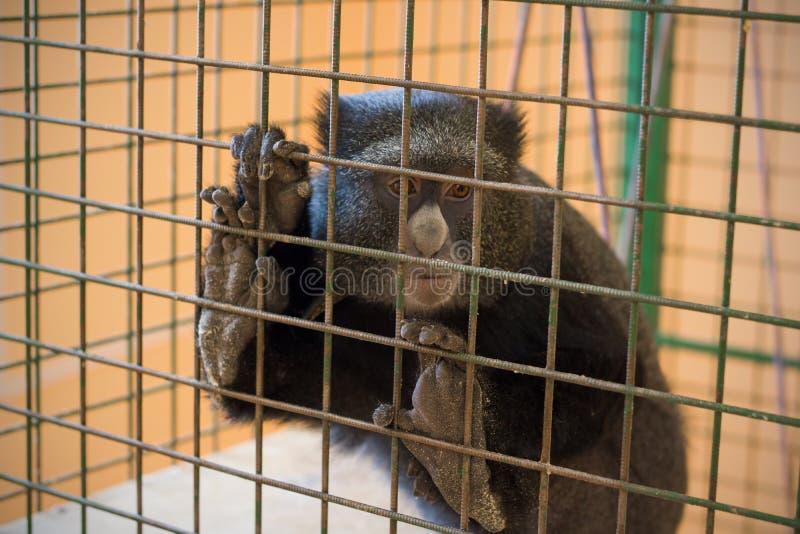 Sad monkey in a cage stock photos