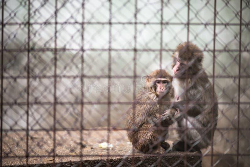 Sad monkeys royalty free stock photos