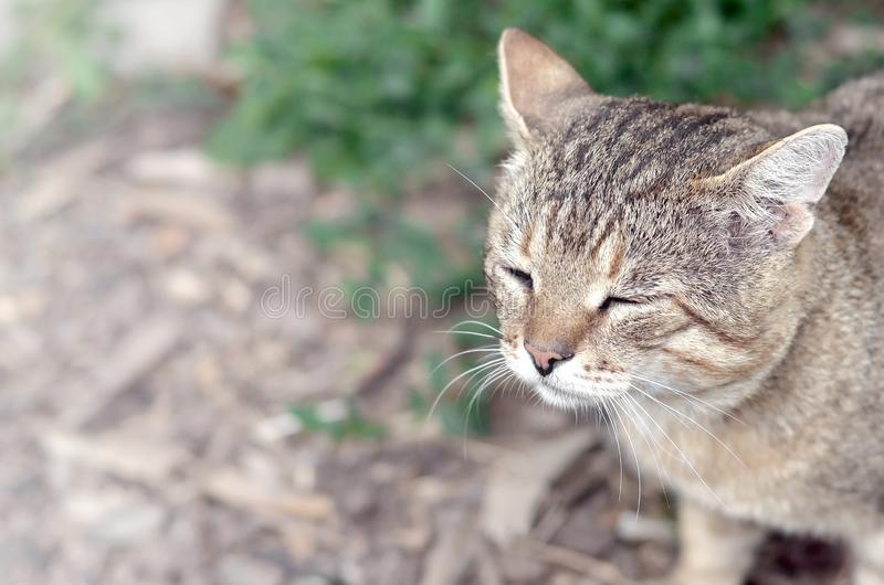 Sad muzzle portrait of a grey striped tabby cat with green eyes, selective focus. Muzzle portrait of a grey striped tabby cat with green eyes, selective focus stock photos