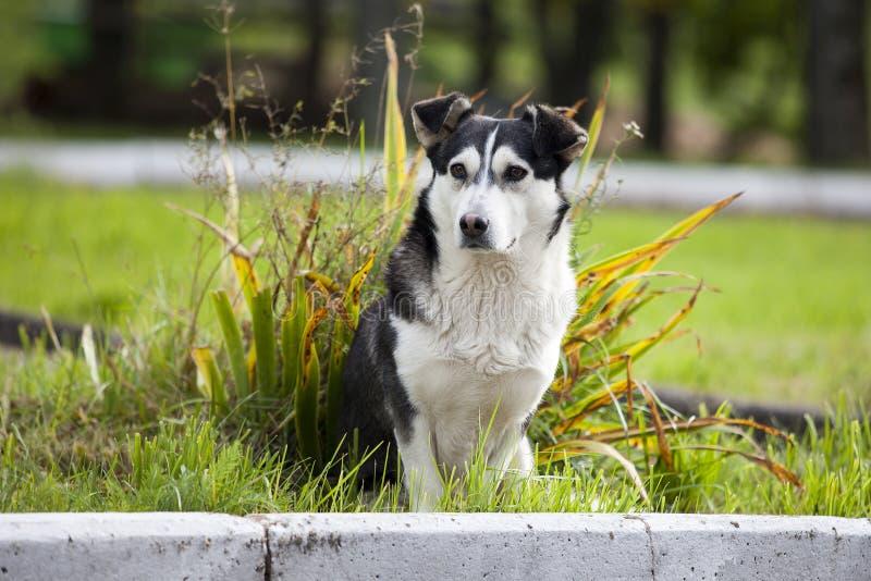 SAD och hemlös hund En ledsen och hemlös hund som överges på gatorna arkivfoto