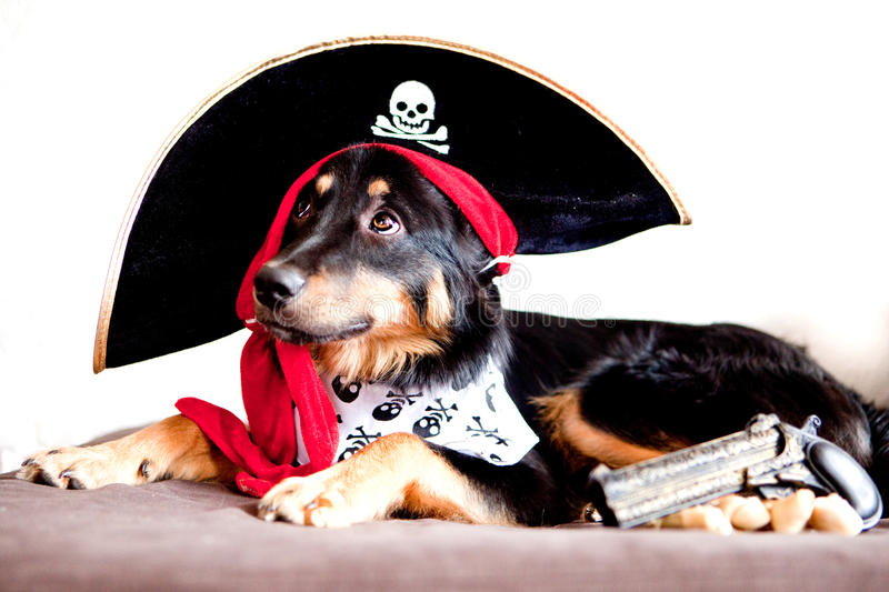 Sanqunetti Design: Pirate Puppy Clipart