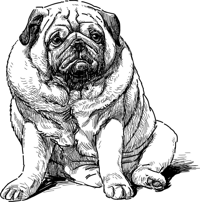 Best Sad Black Adorable Dog - sad-pug-vector-drawing-cute-dog-40175403  Gallery_711567  .jpg