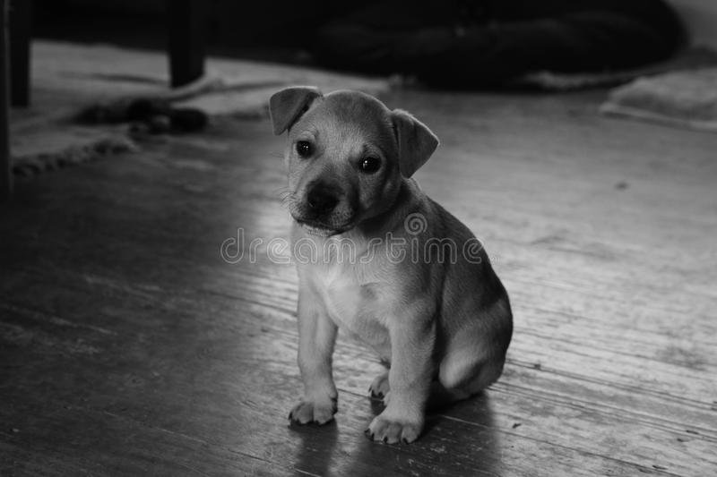 Download Sad pup alone stock photo. Image of young, empty, canine - 25431142