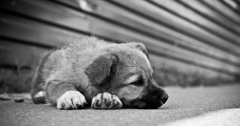 Sad puppy stock photography