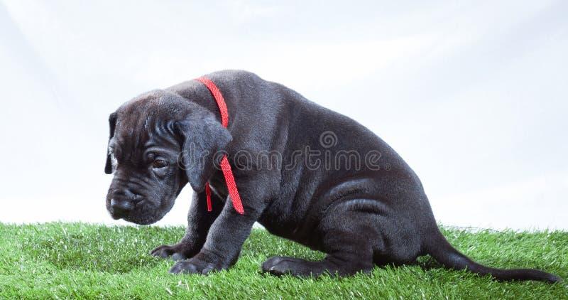 Sad Puppy Stock Images