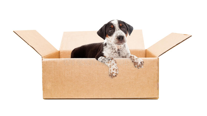 Sad Puppy in Cardboard Box. Cute rescue mixed breed puppy with sad expression in cardboard box and paws hanging over side stock photo