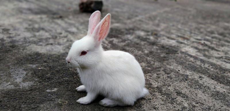 Sad Rabbit royalty free stock photo