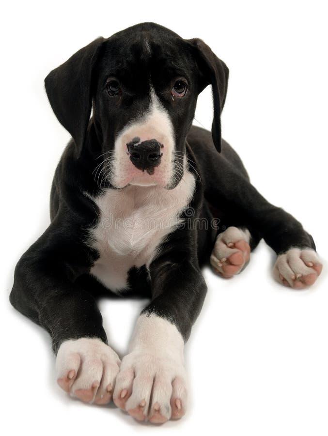 SAD sött barn för hund arkivbilder