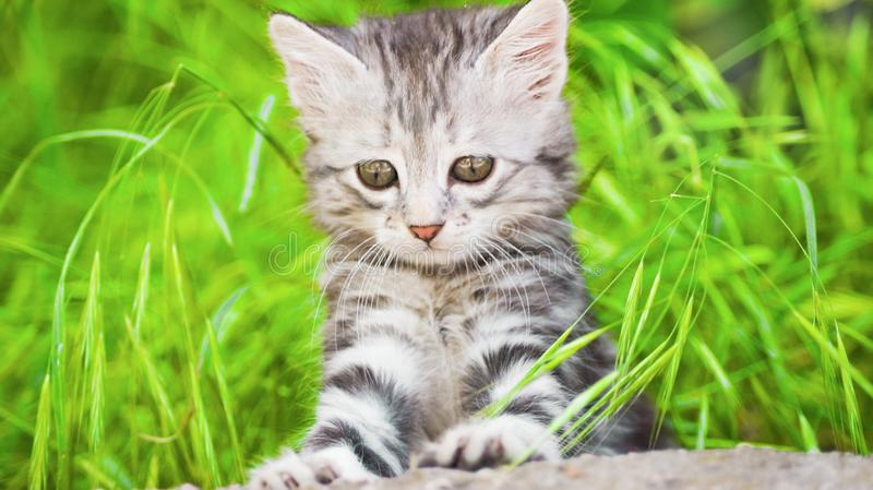 Sad sight. Little kitten looking for something in green graze stock photography