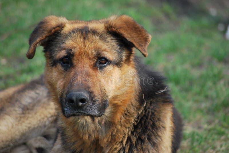SAD stray för hund royaltyfri foto