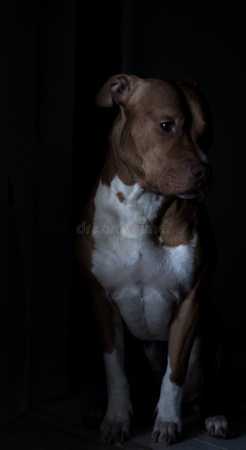 sad sweet dog stock photos