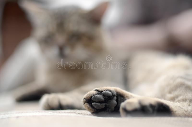 Sad tabby cat lying on a soft sofa outdoors and resting with paw in focus. In the foreground and muzzle in defocus royalty free stock images
