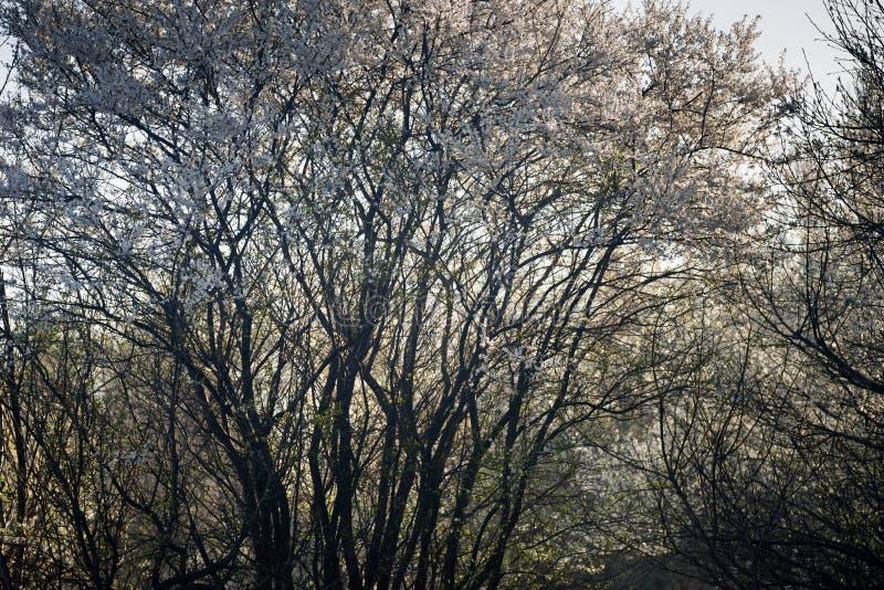 Sad z kwitnącymi drzewami fotografia royalty free