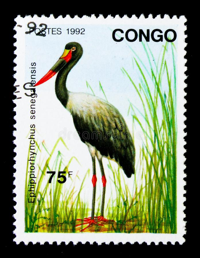 Saddle-billed Stork (Ephippiorhynchus senegalensis), Birds serie. MOSCOW, RUSSIA - NOVEMBER 26, 2017: A stamp printed in Congo shows Saddle-billed royalty free stock images
