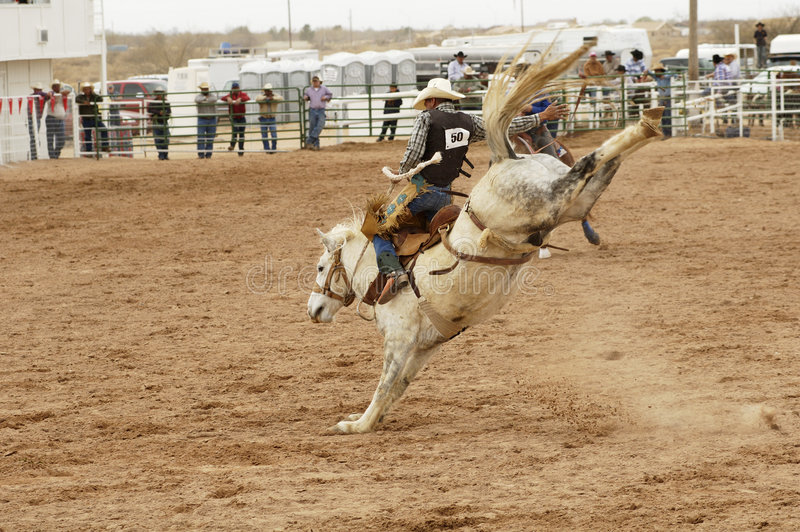 Download Saddle bronc 1 stock photo. Image of leather, country, performance - 560326