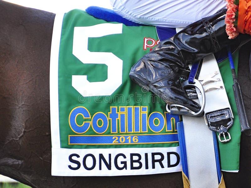 Saddlecloth d'oiseau chanteur - enjeux de cotillon images stock