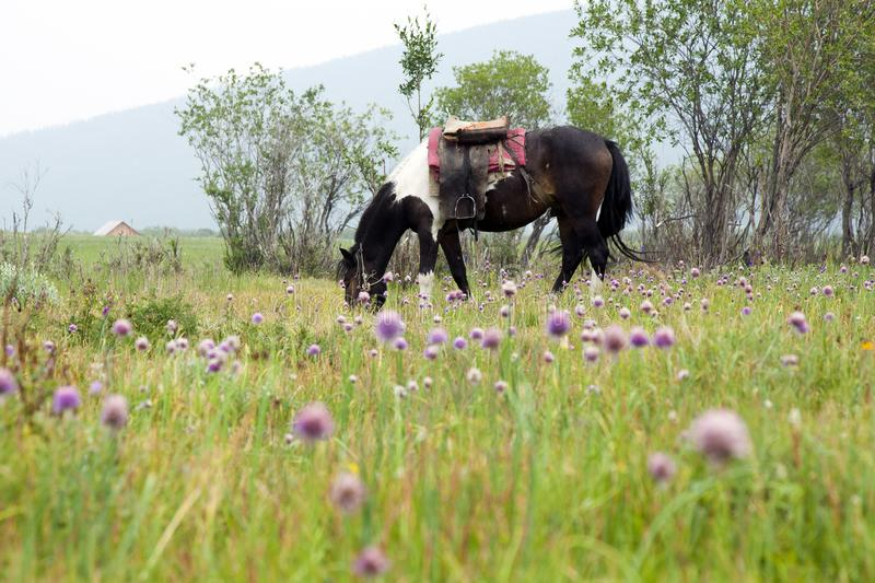 Saddled horse grazing amongst purple flowers royalty free stock photography