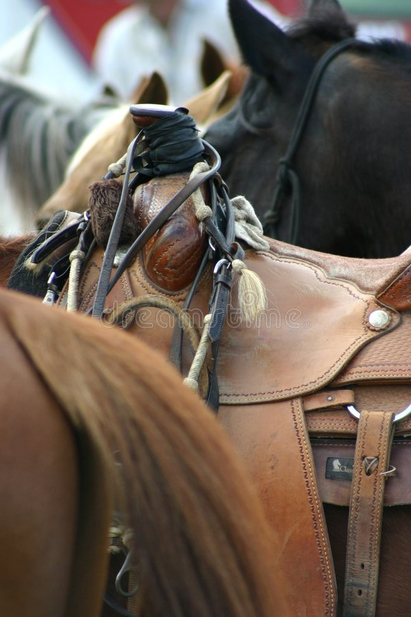 Saddlery. On horse stock photos