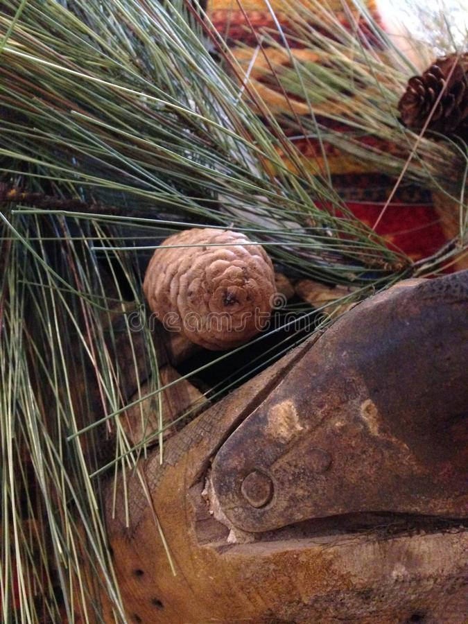 Sadeln med sörjer kottebusken, slut upp, evergreen royaltyfri fotografi