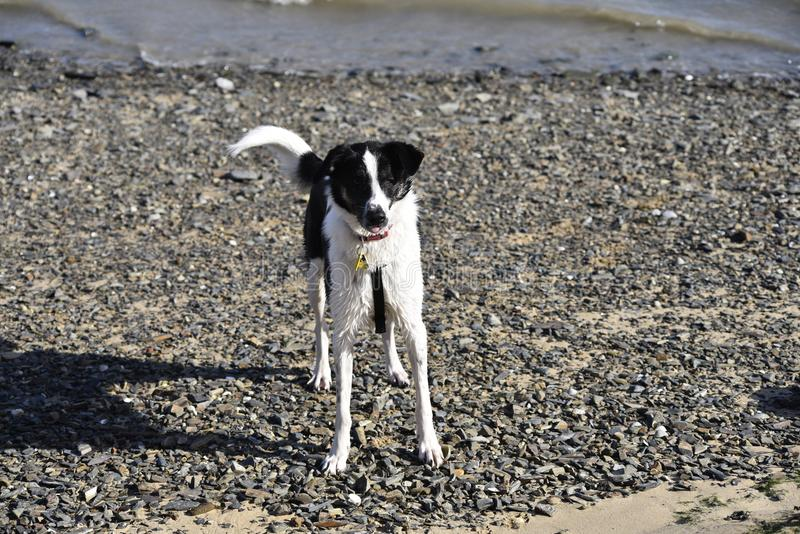 Sadied на пляже на padstow стоковая фотография