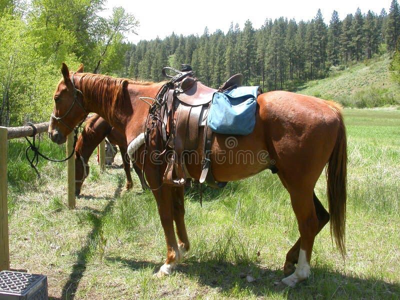 sadlade hästar arkivfoto