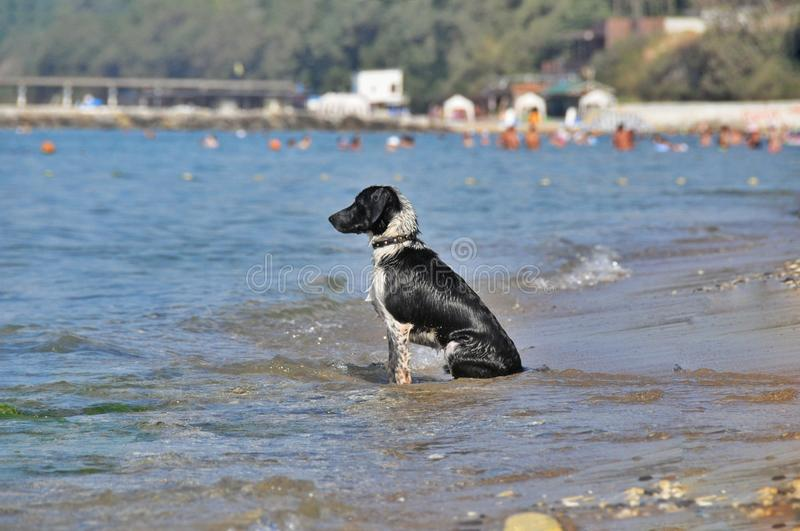 Sadness dogs of the sea royalty free stock photos