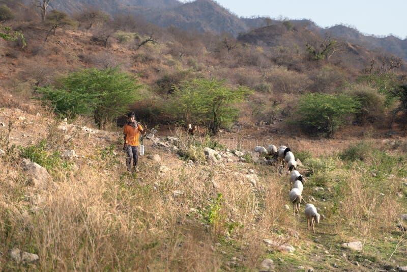 Sadri/India-13 07 2019: El pastor indio y sus animales imagen de archivo libre de regalías