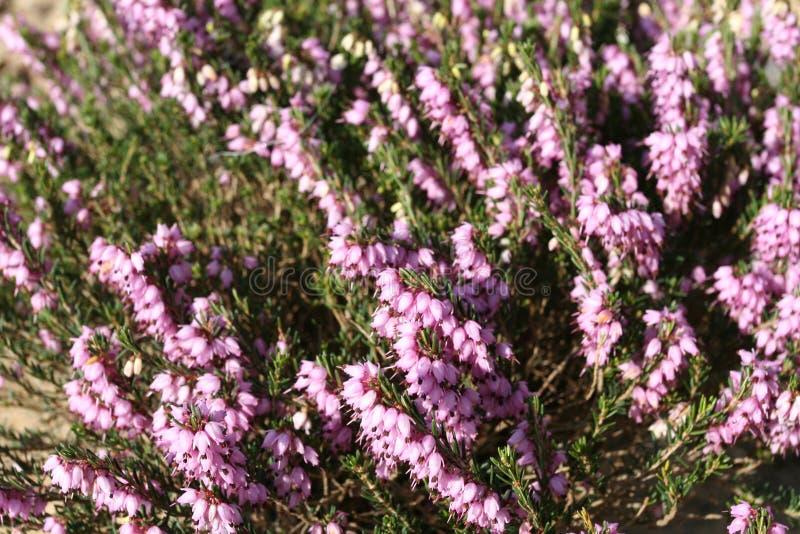 sadzenie ogrodu zdjęcie royalty free