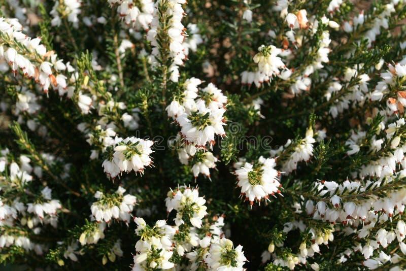 sadzenie ogrodu obrazy stock