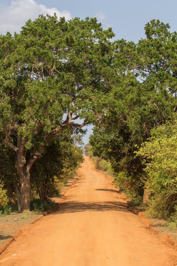 Safai στο Yala Nationalpark στοκ φωτογραφία
