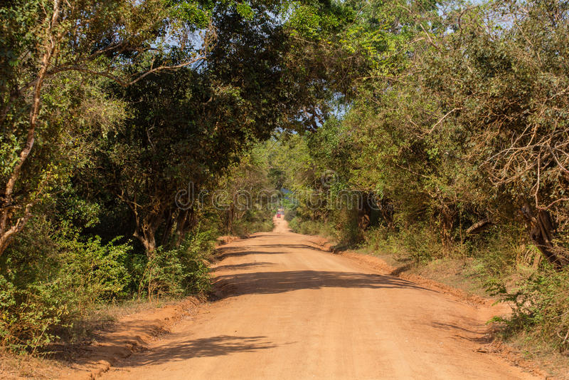 Safai στο Yala Nationalpark στοκ εικόνα με δικαίωμα ελεύθερης χρήσης