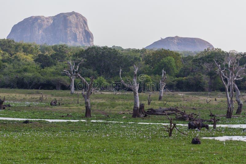 Safai i Yalaen Nationalpark arkivbild