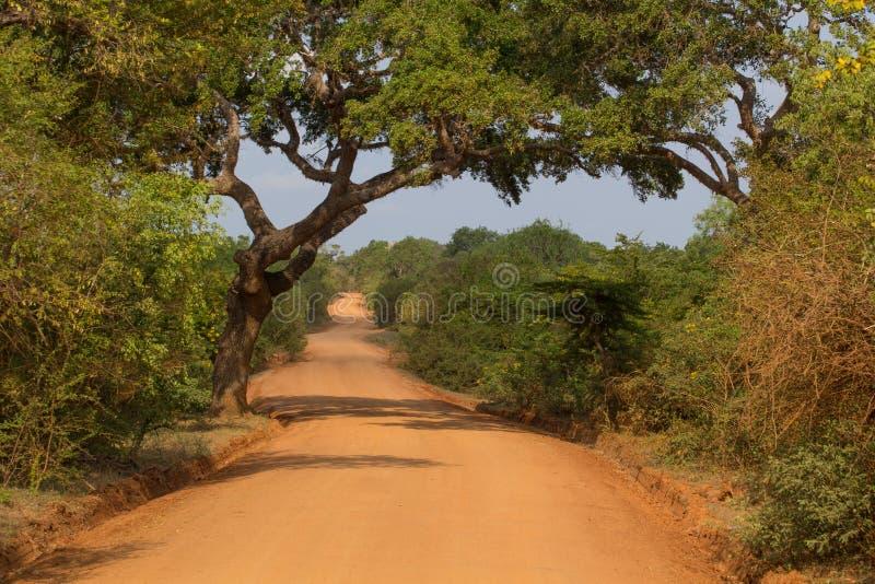 Safai nel Yala Nationalpark immagini stock libere da diritti