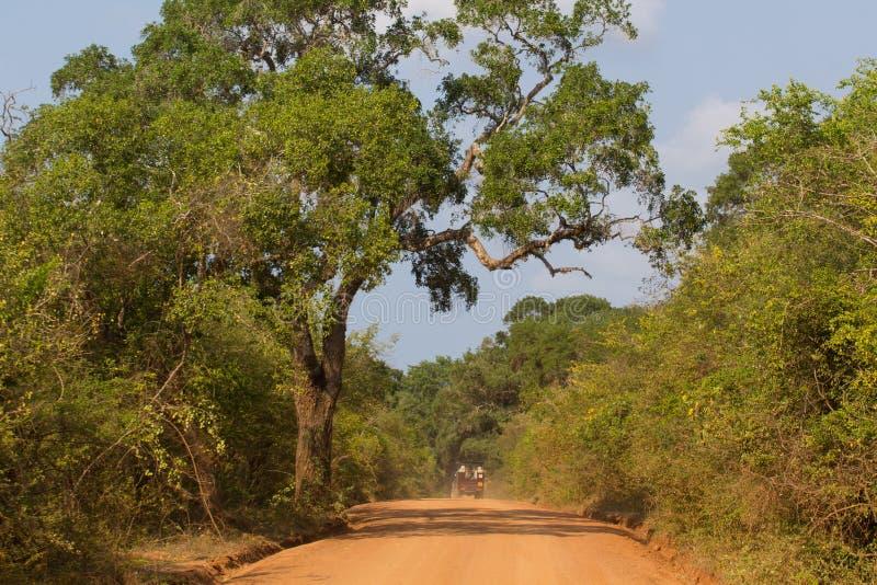 Safai no Yala Nationalpark fotos de stock