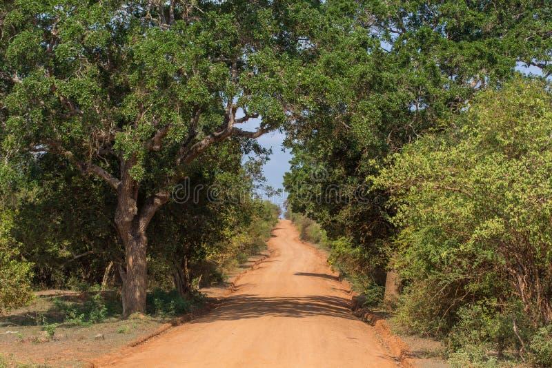 Safai w Yala Nationalpark zdjęcia royalty free
