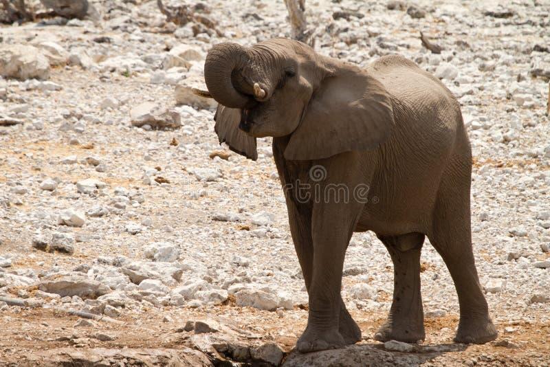 Safari África fotos de archivo
