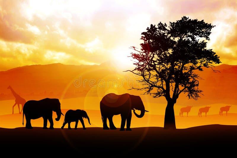 Safari illustrazione di stock