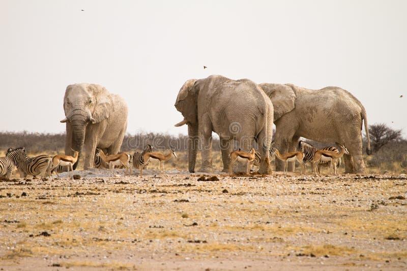 Safari immagine stock libera da diritti