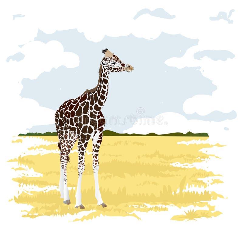 Safari royalty-vrije stock fotografie