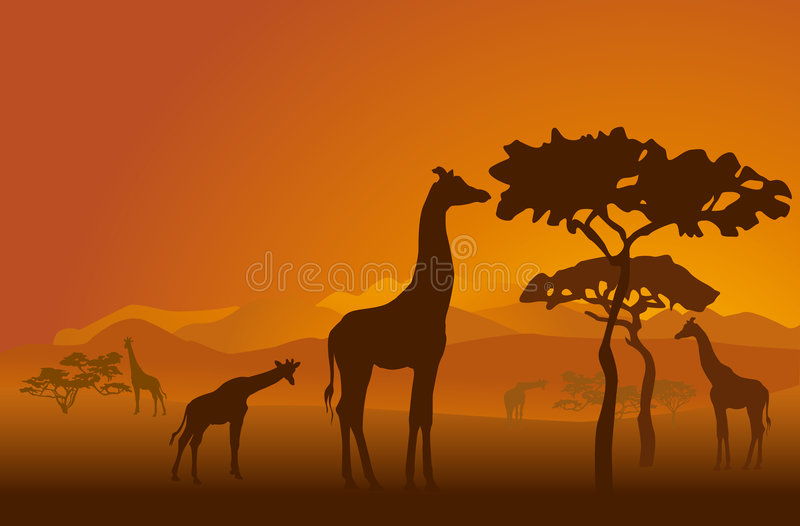 Safari-2. Silhouettes of giraffes in national park of Kenya